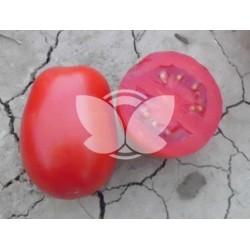 pomidor_leonerosso_f1.jpg