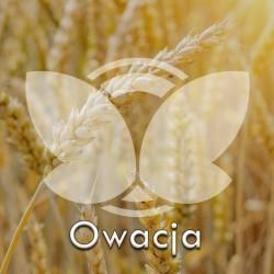 pszenicatradowacja.jpg