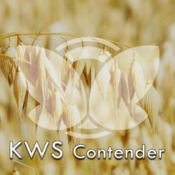 owkwscontender.jpg