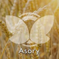 asory.jpg