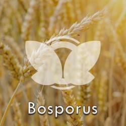 bosporus.jpg