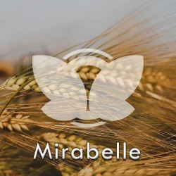 mirabelle.jpg