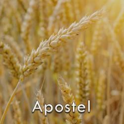 apostel.jpg