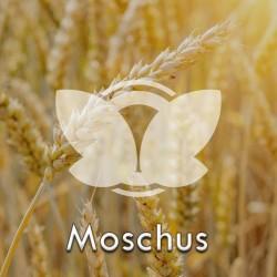 moschus.jpg