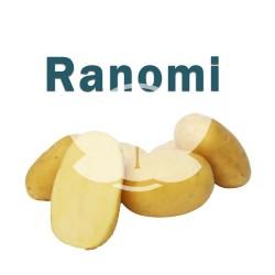 Ranomi.jpg