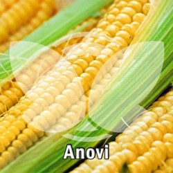 kukurydza-anovi-50-tys.-nas..jpg