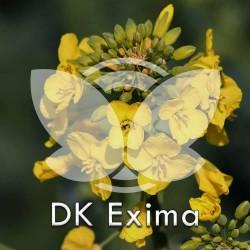 RZEPAK-dk-exima.jpg