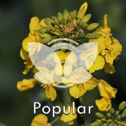 rzpopular.jpg