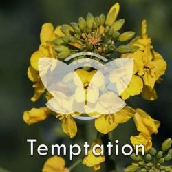 RZEPAK-temptation.jpg