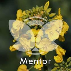 RZEPAK-mentor.jpg