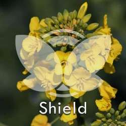 RZEPAK-shield.jpg