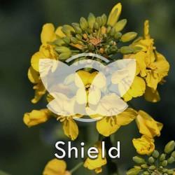RZEPAK-shield.jpg