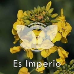 RZEPAK-es-imperio.jpg