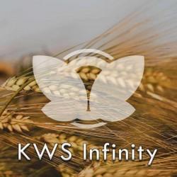 jeczmien-kws-infinity.jpg
