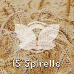 pszenicaoscista-is-spirella.jpg